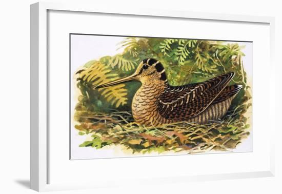 Looking at Nature: The Woodcock-R. B. Davis-Framed Giclee Print