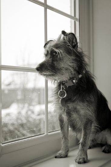 Looking Out-Steve K Photography-Photographic Print