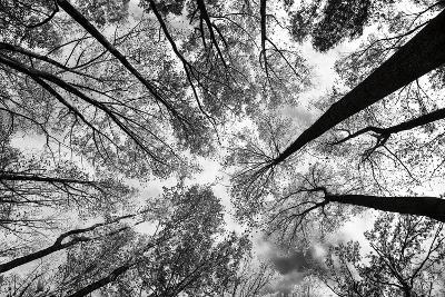 Looking Up I BW-Aledanda-Art Print