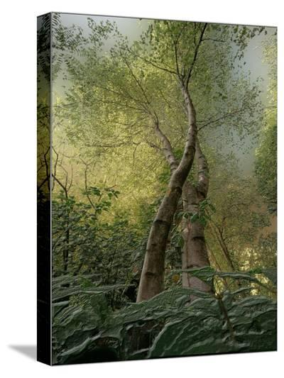 Looking Up-Joseph Vitale-Stretched Canvas Print