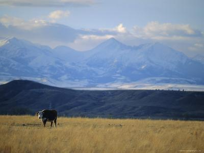 Looking West Towards the Rocky Mountains from Big Timber, Montana, USA-Robert Francis-Photographic Print