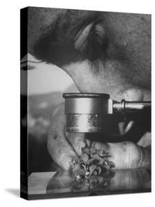 Botany Student Looking at a Flower Through a Microscope by Loomis Dean