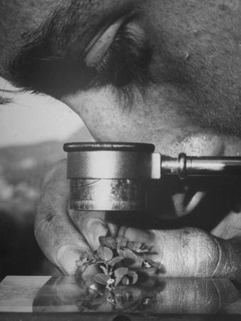 Botany Student Looking at a Flower Through a Microscope