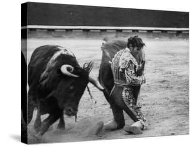 Matador Manuel Benitez, Performing Series of Passes on His Knees