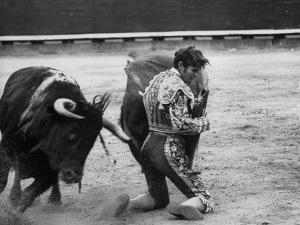 Matador Manuel Benitez, Performing Series of Passes on His Knees by Loomis Dean