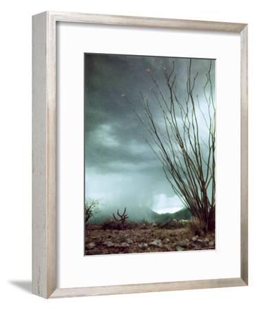 Pillar of Rain Descending From Thunderhead Onto Desert