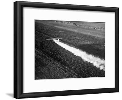 Plane Spraying Alfalfa Fields in Imperial Valley with Ddt