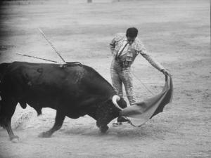 """Spanish Matador Antonio Ordonez Executing Left Handed Pass Called """"Pase Natural"""" During Bullfight by Loomis Dean"""
