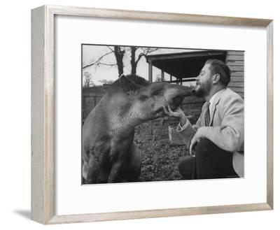 Writer/Naturalist Gerald Durrell Petting South American Tapir in His Private Zoo on Isle of Jersey