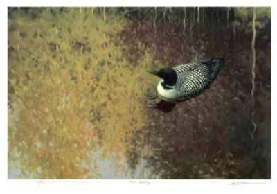 Loon Tapestry-Claudio D'Angelo-Collectable Print