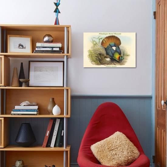Lophophorus Impeyanus Himalayan Monal Pheasant Art Print John Gould Art Com