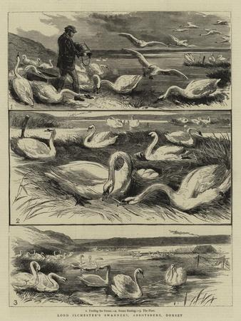 Lord Ilchester's Swannery, Abbotsbury, Dorset--Giclee Print