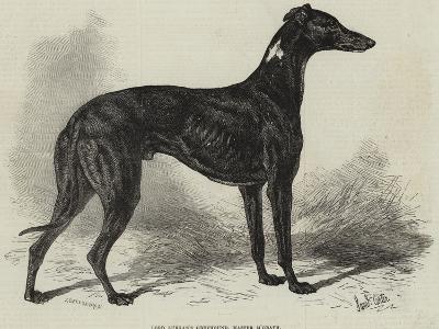 Lord Lurgan's Greyhound, Master M'Grath-Samuel John Carter-Giclee Print