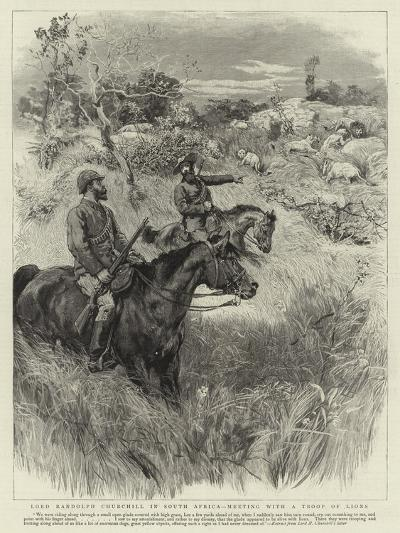 Lord Randolph Churchill in South Africa, Meeting with a Troop of Lions--Giclee Print