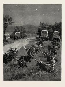 Lord Randolph Churchill in South Africa, the Oxen Outspanned in Camp