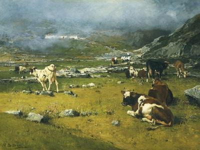 Mountain Landscape with Cows Grazing in Upper Area of Biella