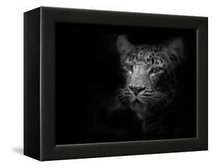 Tiger by Lori Hutchison