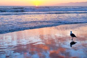 Venice Beach Sunset by Lori Hutchison