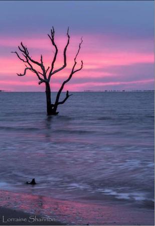 lorraine-shannon-pink-sunrise