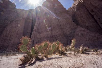 Los Colorados, Salta Region, Argentina-Peter Groenendijk-Photographic Print
