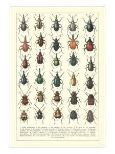 Lots of Beetles