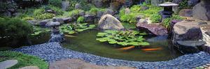 Lotus Blossoms, Japanese Garden, University of California, Los Angeles, California, USA