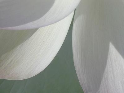 Lotus Detail I-Jim Christensen-Photographic Print