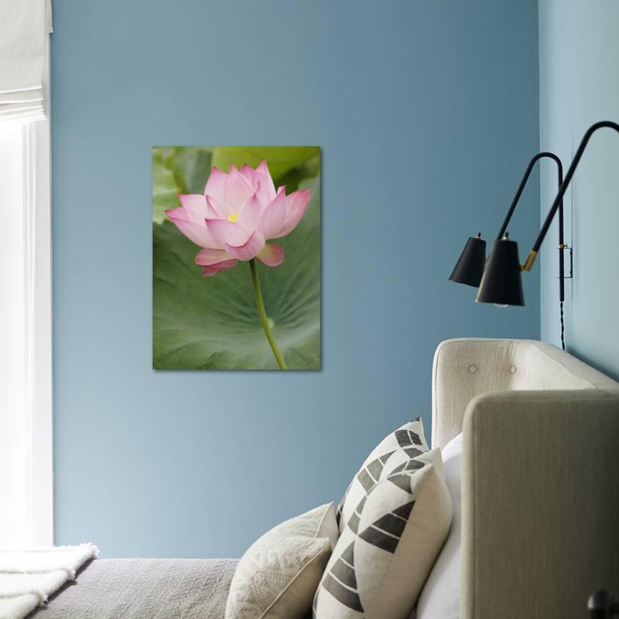 Lotus Flower China Photographic Print By Adam Jones Art