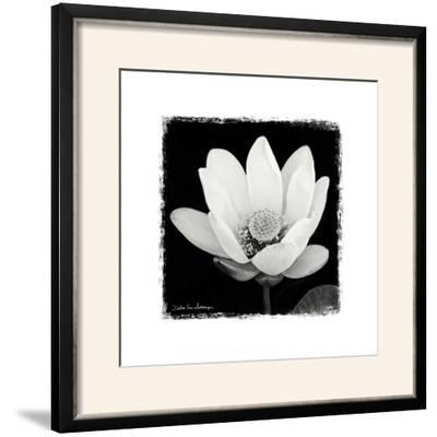 Lotus Flower I Framed Photographic Print By Debra Van Swearingen