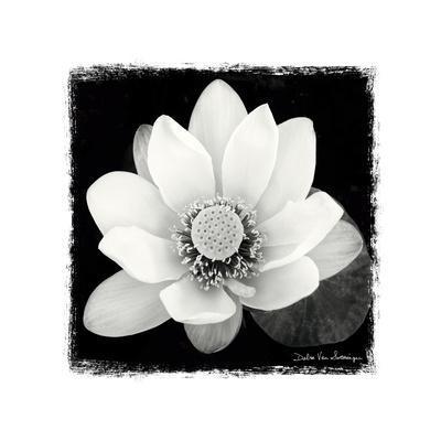 https://imgc.artprintimages.com/img/print/lotus-flower-ii_u-l-pxzqfu0.jpg?p=0