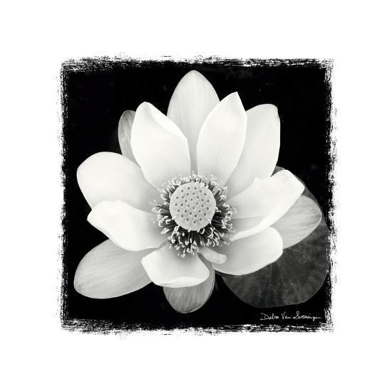 Lotus Flower II-Debra Van Swearingen-Premium Giclee Print