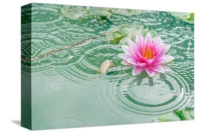 Lotus Flower in Pond Rain Drop--Stretched Canvas Print