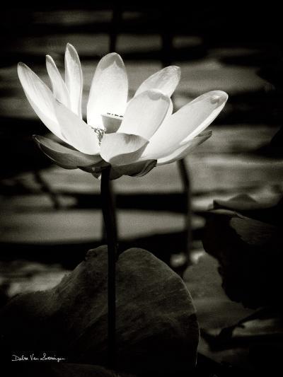 Lotus Flower VIII-Debra Van Swearingen-Art Print