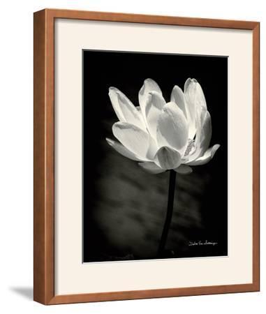 Lotus Flower X Framed Photographic Print By Debra Van Swearingen