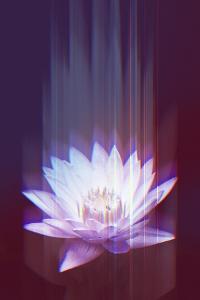 Lotus Glitch