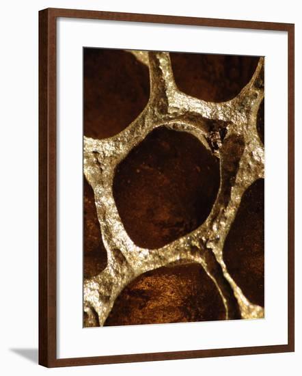Lotus Pods I-Monika Burkhart-Framed Photographic Print