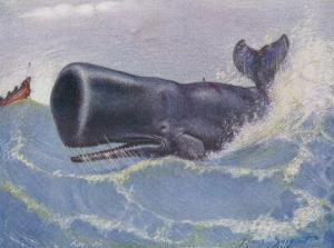 Sperm Whale Physeter Macrocephalus by Louis A. Sargent