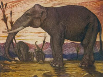 The Indian Elephant: Elephans Indicus