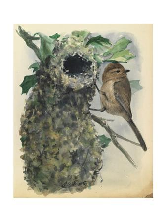A Bush Tit Bird Is Perched Outside His Nest