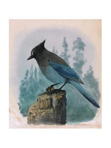 A Painting of a Blue-Fronted, or Steller's Jay Perched on a Stump by Louis Agassi Fuertes