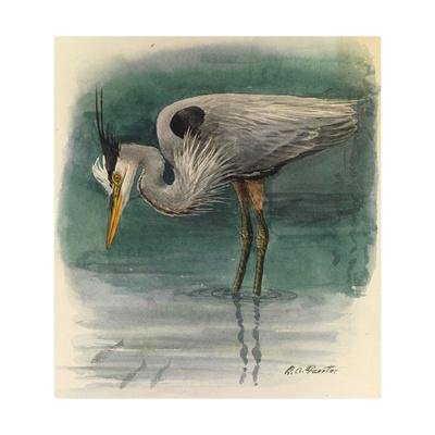 A Painting of a Great Glue Heron Hunting for Fish in Shallow Water