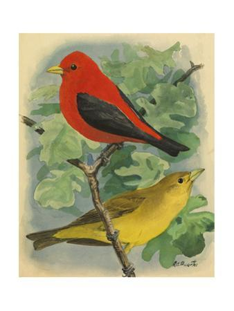 A Painting of a Male and Female Scarlet Tanager by Louis Agassi Fuertes