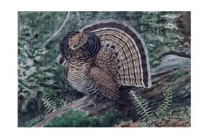 A Painting of a Ruffed Grouse, Bonasa Umbellus Umbellus by Louis Agassi Fuertes