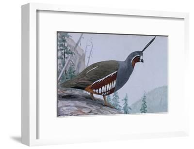 A Painting of a Single Mountain Quail