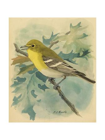 A Painting of a Yellow-Throated Vireo
