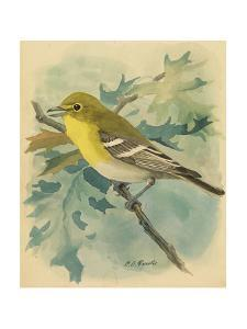 A Painting of a Yellow-Throated Vireo by Louis Agassi Fuertes
