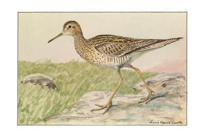 A Painting of an Upland Sandpiper