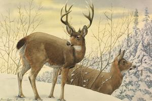 A Painting of Two Black-Tailed Deer Standing in the Snow by Louis Agassi Fuertes