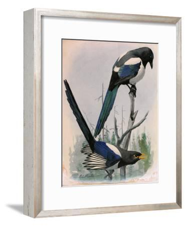 A Painting of Two Species of Magpie Perched on Tree Branches