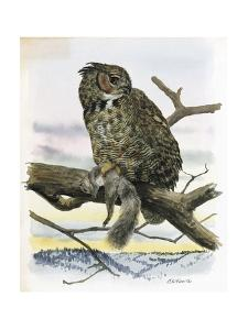 An Illustration of a Great Horned Owl with Prey in His Grip by Louis Agassi Fuertes